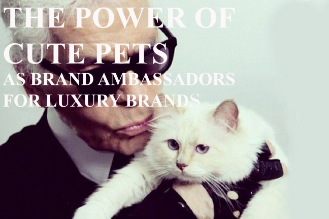 mgluxurynews THE POWER OF CUTE PETS ON DIGITAL MARKETING